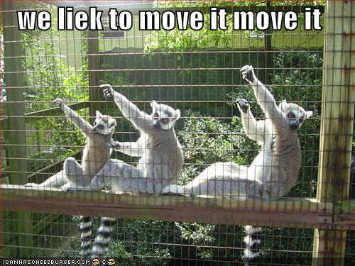lemurs we liek to move iet move it icanhascheezburger lolcats funny meme